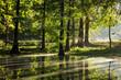 Sumpfzypressen im Gegenlicht, Nordrhein-Westfalen, Deutschland, Europa