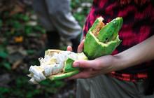 Holding A Broken Open Cacao Po...