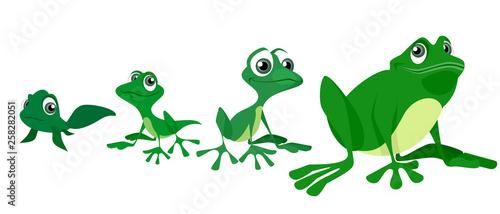 Valokuvatapetti Process of growing a frog