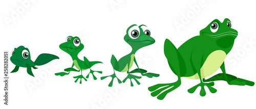 Fototapeta Process of growing a frog