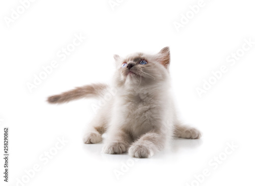 Fotografiet  Adorable cat on isolated white background