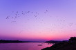 Silhouette sunset river evening with flock flying birds above lake purple sky / Mekong River Sunset Asia