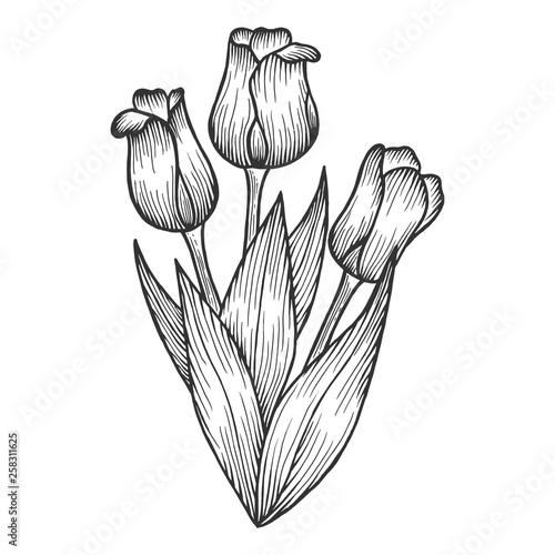 Valokuva  Tulip flowers sketch engraving vector illustration