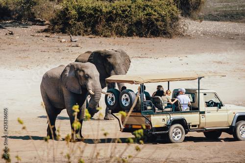 Photo Touristen begegnen einer Gruppe Afrikanischer Elefanten (Loxodonta africana) wäh