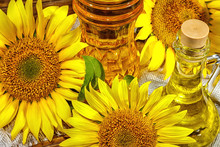 Rural Still-life - Sunflower Oil In Bottles With Flowers Of Sunflower (Helianthus Annuus), Closeup