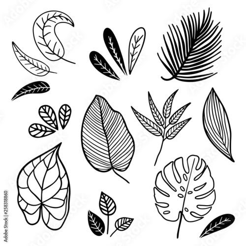 Fototapeta Set of vintage style leaves. Black and white handmade illustration. obraz na płótnie