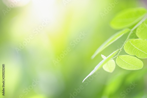 Foto auf Gartenposter Lime grun Close up beautiful view of nature green leaves on blurred greenery tree background with sunlight in public garden park. It is landscape ecology and copy space for wallpaper and backdrop.