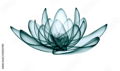 x-ray image of a flower  isolated on white, the lotus 3d illustration Tableau sur Toile