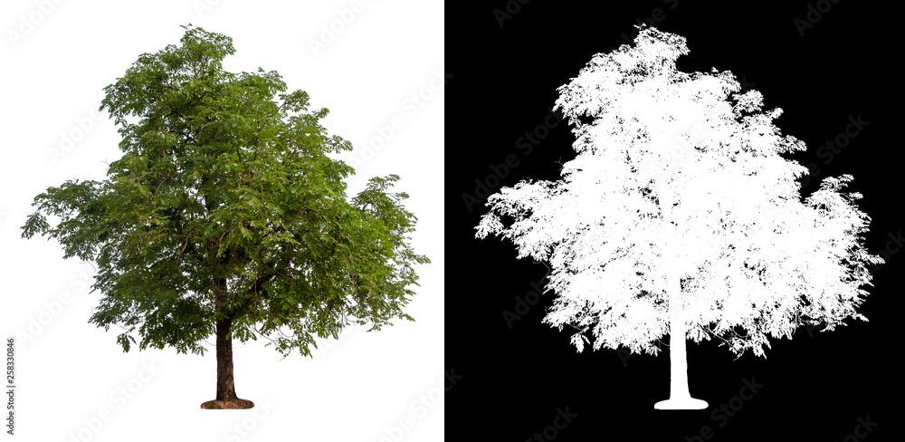 Fototapety, obrazy: isolated tree on white background