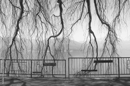 Fotografia  Äste von Oben am Lago maggiore