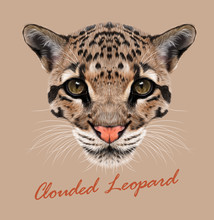 Clouded Leopard Animal Face. Vector Asian, Indochina, Malaysian Big Cat Head Portrait. Realistic Fur Beast Of Clouded Leopard. Predator Eyes Of Wildcat. Big Cat Head Isolated On Beige Background.