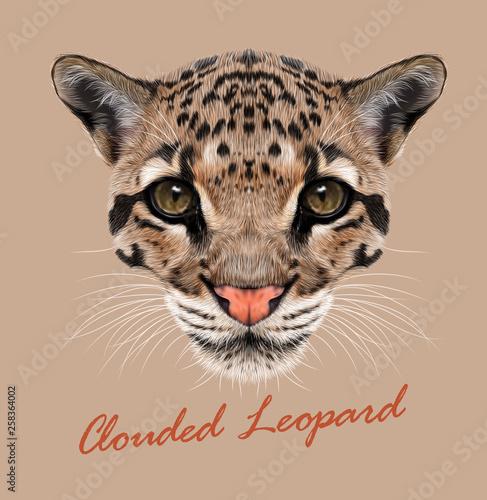 Foto  Clouded Leopard animal face