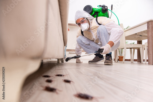 Cuadros en Lienzo  Pest control contractor working in the flat