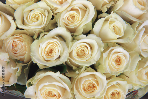 Fotobehang Roses bouquet of milky roses