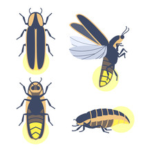 Insect Beetle Firefly. Vector ...