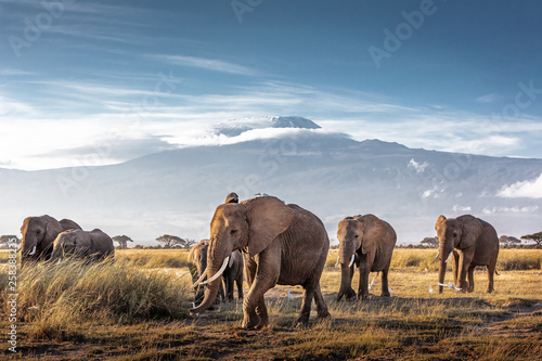 Stickers pour porte Elephant Herd of African Elephants in Front of Kilimanjaro
