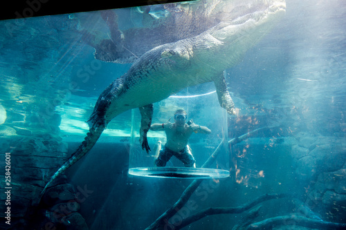 young man diving with a crocodile in a cage, Darwin, Northern Territory, Austral Poster Mural XXL