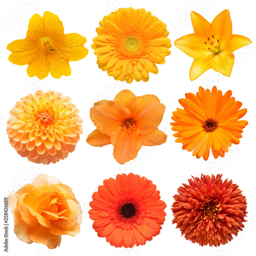 Fototapeta Collection beautiful head orange flowers of gerbera, lily, daylily, calendula, rose, dahlia, chrysanthemum isolated on white background. Beautiful floral delicate composition. Flat lay, top view obraz na płótnie