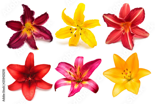 Photo  Flowers collection multicolored lilies and daylilies isolated on white background