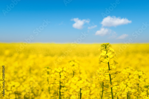Fotografia  sunny spring landscape