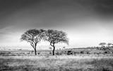 Fototapeta Sawanna - African savannah plains scenery
