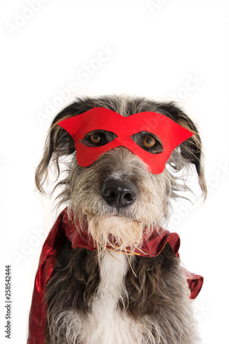 DOG SUPER HERO COSTUME Canvas Print