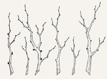 Hand Drawn Set Of Tree Branch In Vintage Style. Black And White Collection Of Sakura Branch Graphic Element For Cards, Invitation, Prints, Posters, Tattoo, Clothes, T-shirt, Patches, Stickers.