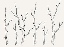 Hand Drawn Set Of Tree Branch ...
