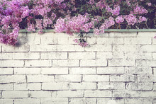 Branches Of Blossoming Lilacs ...