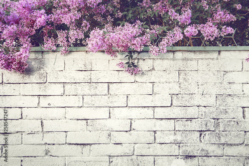 Keuken foto achterwand Lilac Branches of blossoming lilacs over a brick fence