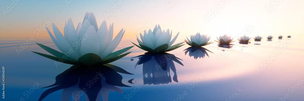 Fototapety, obrazy: Lotusblüten im Sonnenuntergang 2