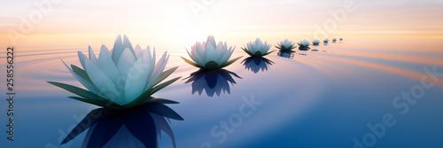 Obraz Lotusblüten im Sonnenuntergang - fototapety do salonu