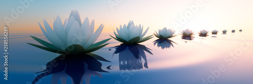 Obraz Lotusblüten im Sonnenuntergang 2 - fototapety do salonu