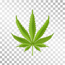 Hemp Leaf Isolated On Transparent Background. Realistic Marijuana. Cannabis Plant. Vector Illustration