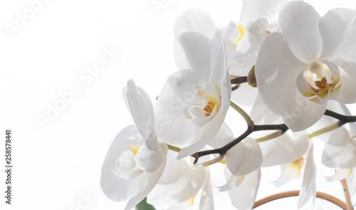 Aluminium Prints Orchid Weiße Orchidee