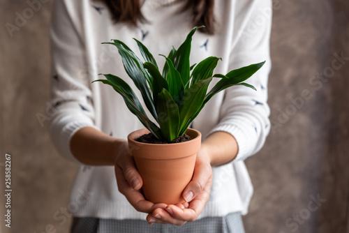Obraz na plátně Woman holding dracaena plant