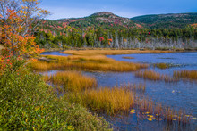 Seal Cove Pond In Autumn