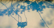 canvas print picture - Floral graphical sakura elements