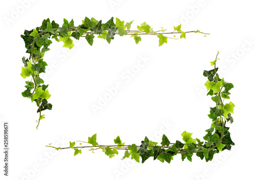 Frame of ivy Canvas