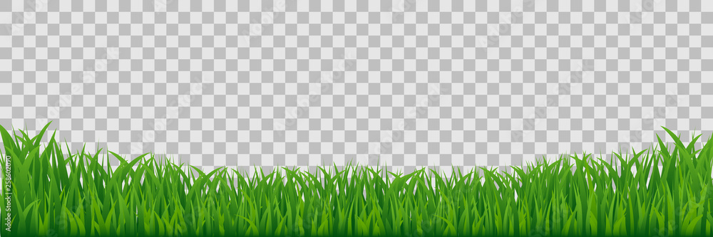Fototapety, obrazy: Green Meadow Grass Border Isolated On Transparent Vector Background.