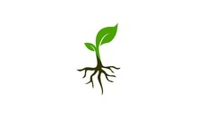 Seed Plant Design Logo