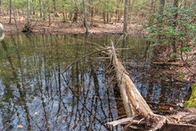 Lake Vernal Pool In The Forest