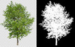 Leinwanddruck Bild - single tree on transparent picture background with clipping path, single tree with clipping path and alpha channel on black background