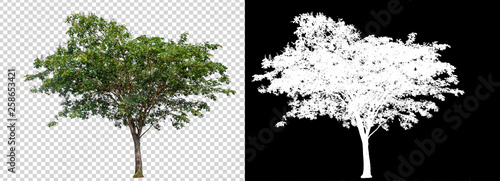 single tree on transparent picture background with clipping path, single tree wi Fototapete