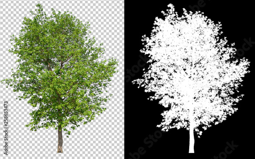 Fotografia single tree on transparent picture background with clipping path, single tree wi