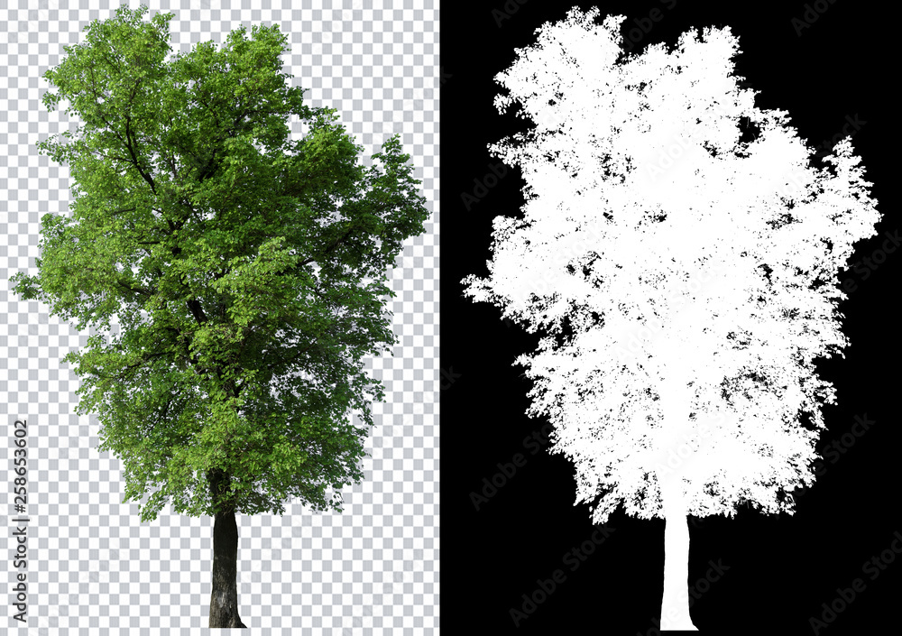 Fototapety, obrazy: single tree on transparent picture background with clipping path, single tree with clipping path and alpha channel on black background