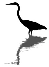 Great Egret Silhouette And Reflection