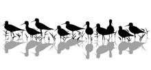 Stilt Waders In Marsh Silhouette