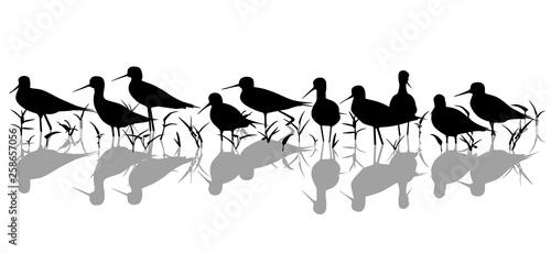 Fotografia, Obraz  Stilt waders in marsh silhouette