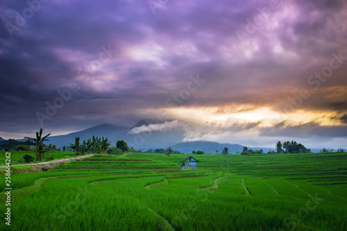 Foto op Plexiglas Groene amazing morning sky with green fields asia natural beauty of bengkulu utara indonesia with mountain barisan and green nature